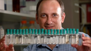 Dr. David Buchwalter in his lab. Photo by Marc Hall
